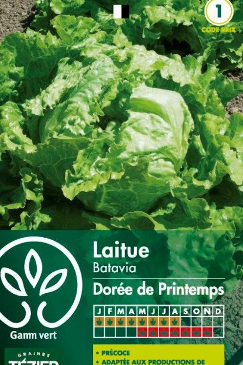 Graine batavia dorée de printemps s.1 Gamm Vert (ref : w35889)