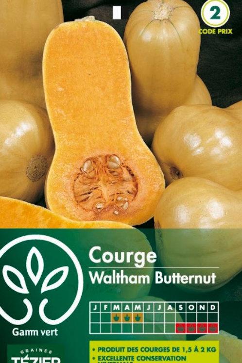 Graine courgette wald.butternut.s.2 Gamm Vert (ref : w17715)
