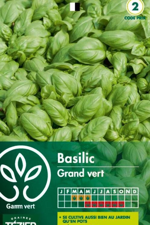 Graine basilic grand vert s.2 Gamm Vert (ref : w35886)