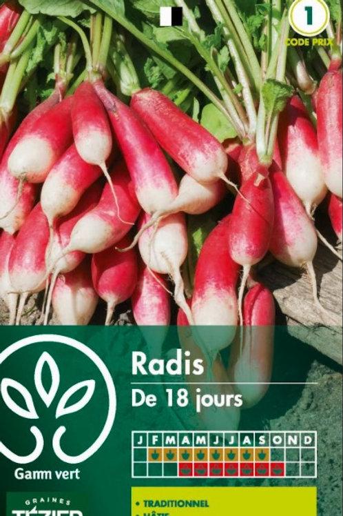 Graine radis i8 jours s.1 Gamm Vert (ref : w36399)