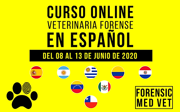 site-español.png