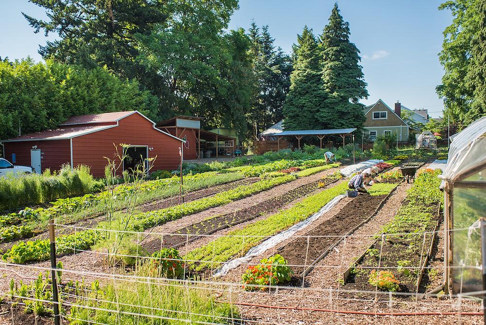 Courtesy of The Side Yard Farm - Photographer: Shawn Linehan