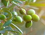 Maison Tamisier Gibasse à l'huile d'olive