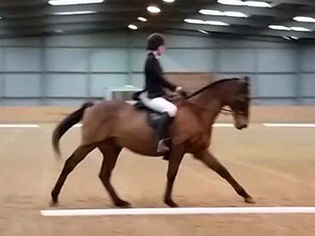 Using a bitless bridle really taught me to ride