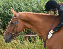 First winner of 'Best Bitless' at Concordia Equestrians inaugural event