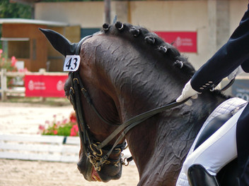 Rider calls for bitless bridles to be allowed in dressage