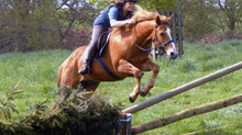 Equestrian organisations should commend bitless riders, not discriminate against them.