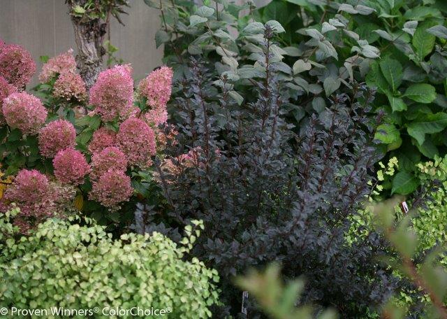 fall shrubs.jpg
