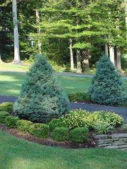 evergreen driveway