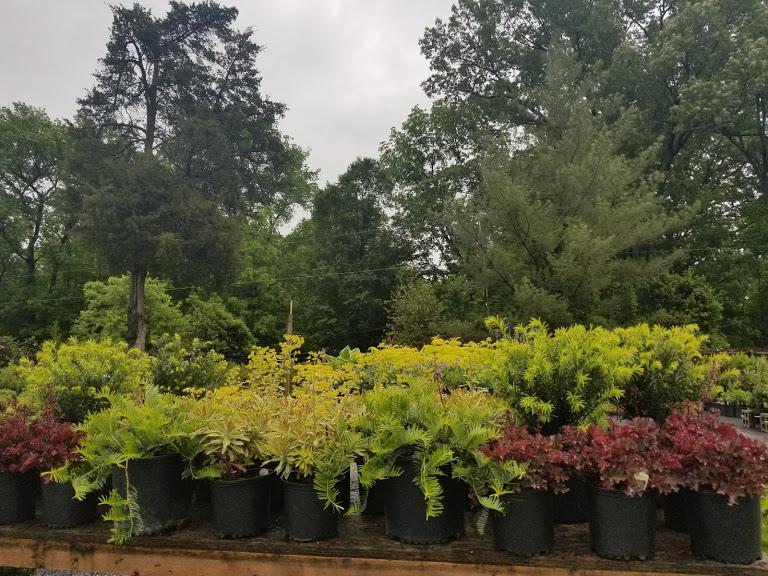 Fall garden stock