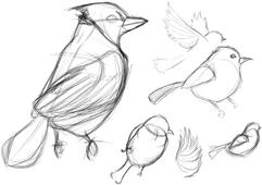 birdstudies.png