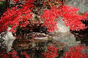 Kioto, Templo Eikando.jpg