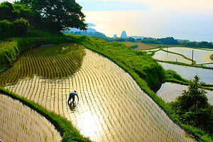 yamaguchi-Farmer_in_Higashi-ushirobata_R