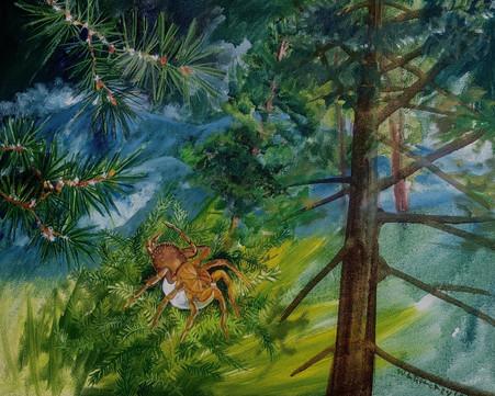 Spruce moss spider.jpg
