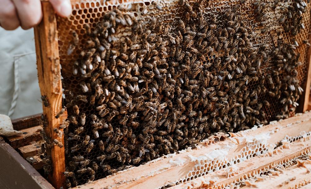 Bees © Cristina Perebicovschi for Apinatur