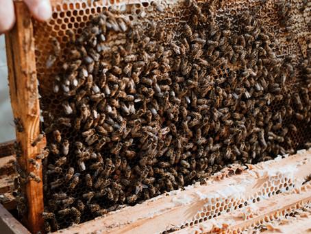 7 Curiozități despre miera de albine