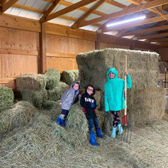 barn hay.jpg
