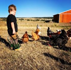 luke chickens.jpg