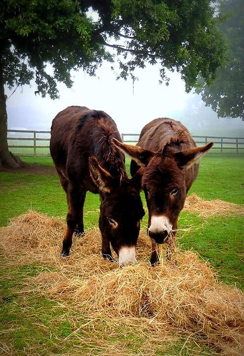 2 Donks - Autumn 2016.jpg