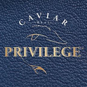 Privilege Logo-2.jpg