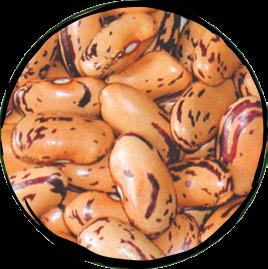 Borlotti Stregnoni Dry Beans - 500gr