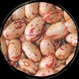 Small Borlotti Dry Beans - 500gr