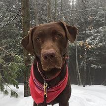 A true Maine mountain puppy #maine #pine