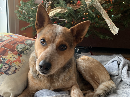 Reflecting on Dogs & the Holidays