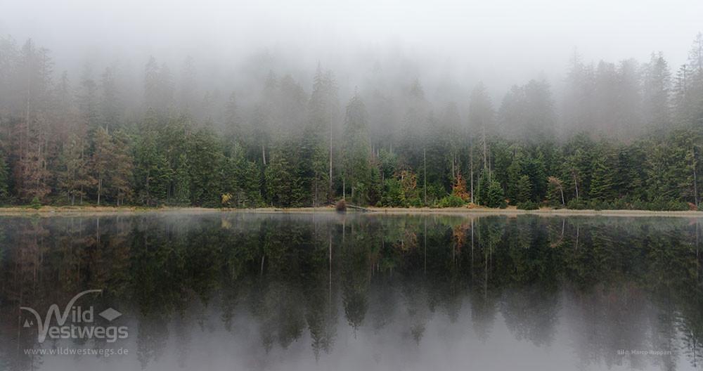 Wildsee - Nationalpark Schwarzwald