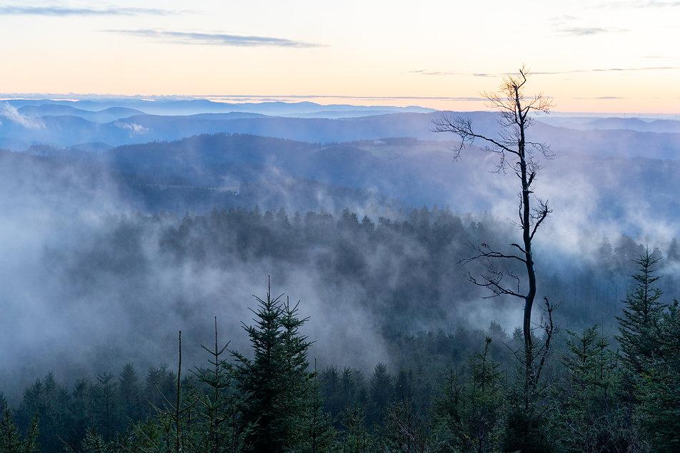 Pressebild-Blick in den Schwarzwald-Wild