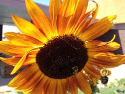 flower_bees.jpg