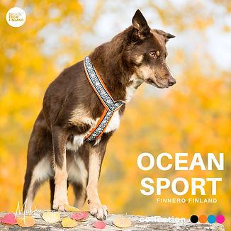 Ocean-valjas-oranssi-Priima-Miikkuvaan-F