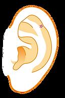 耳イラストb5.png