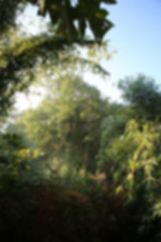 jardin jungle karlostachys, parc exotique de seine maritime