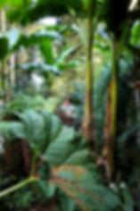 jardin exotique en normandie, le jardin jungle
