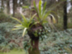 epiphytes jardin jungle hivers.JPG