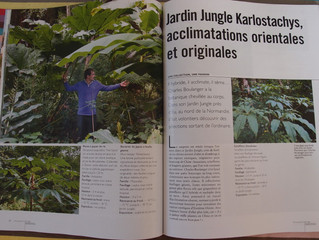 Le jardin jungle dans l'art des jardins