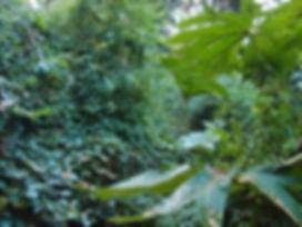 jardin sauvage, normandie