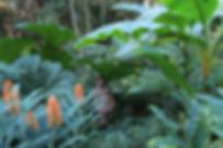 Jardin Jungle Karlostachys, Garden of Normandy, exotic garden of France