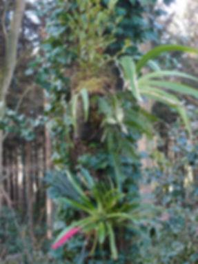 epiphytes du jardin jungle