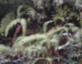 Diplopterygium chinense CHB14.CH96, jardin jungle, parc a visiter