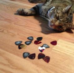 Studio cat: Gibson