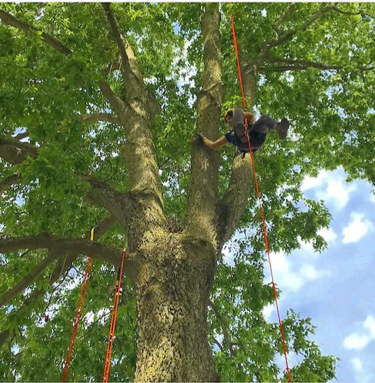 Jenny in the tree