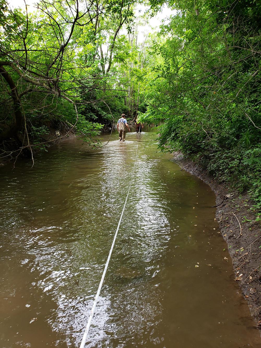 Reece in the stream