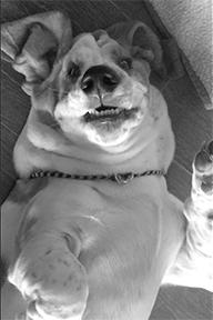 Hound upside down.
