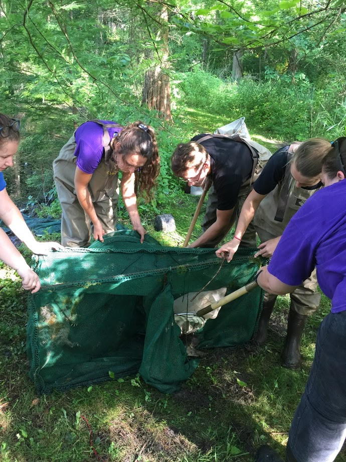 group trying to safely remove snapping turtles