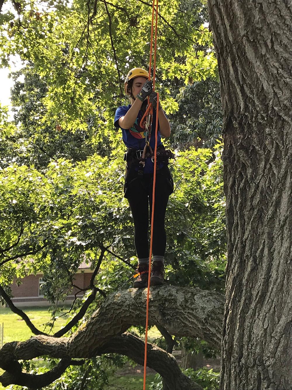 Jenny standing on a tree limb in climbing gear