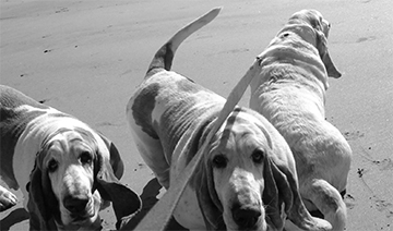 Dogs on the beach.