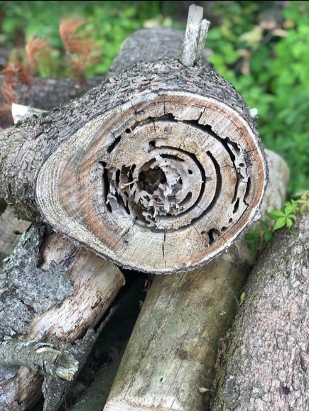 A really cool log