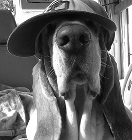 Hound in his favorite Padre's hat. H